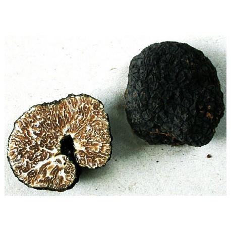 Trufe negre (tuber-mesentericum)